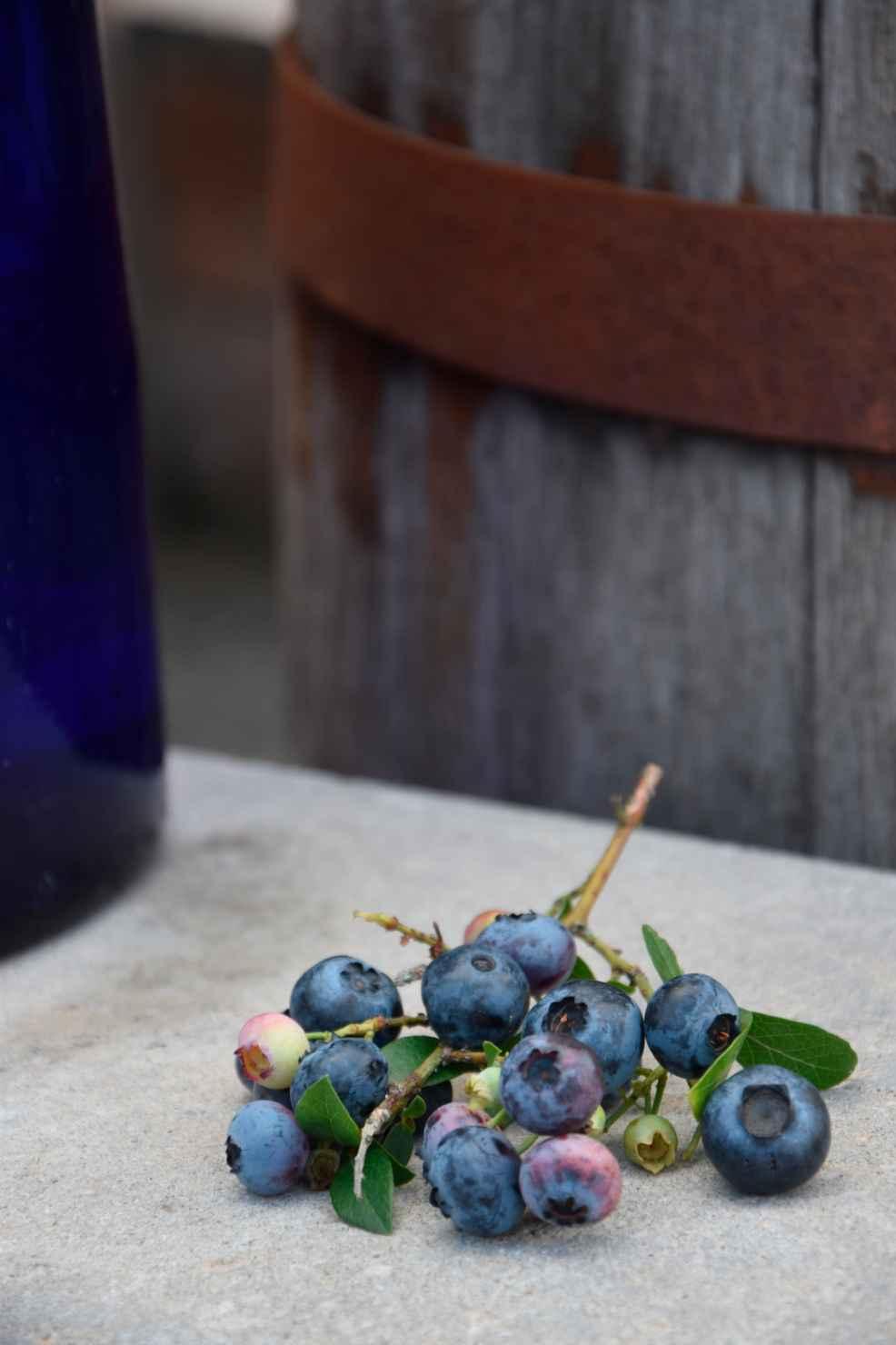 Produktbild på Amerikanskt blåbär 'Roxy Blue'