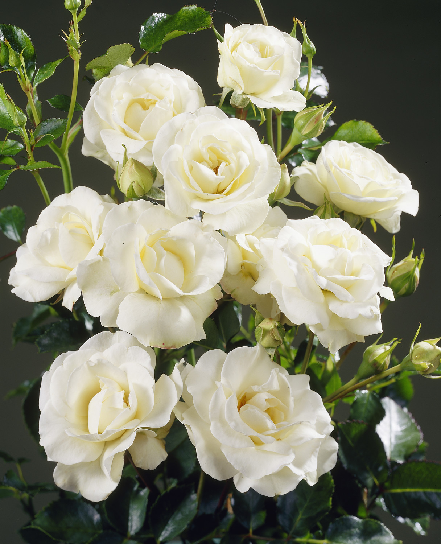 chateau parfym blodapelsin magnolia