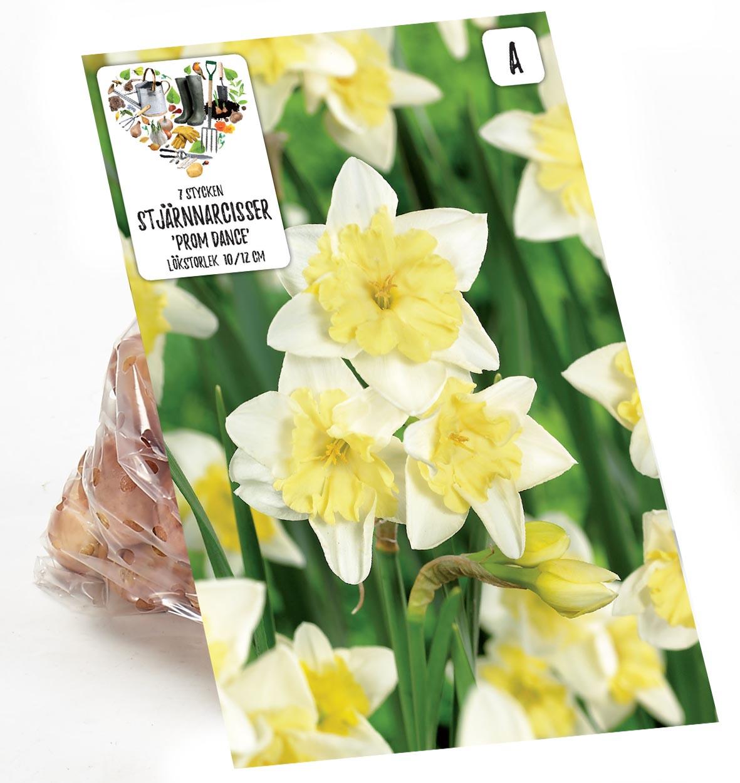 Produktbild på Narciss 'Prom Dance'