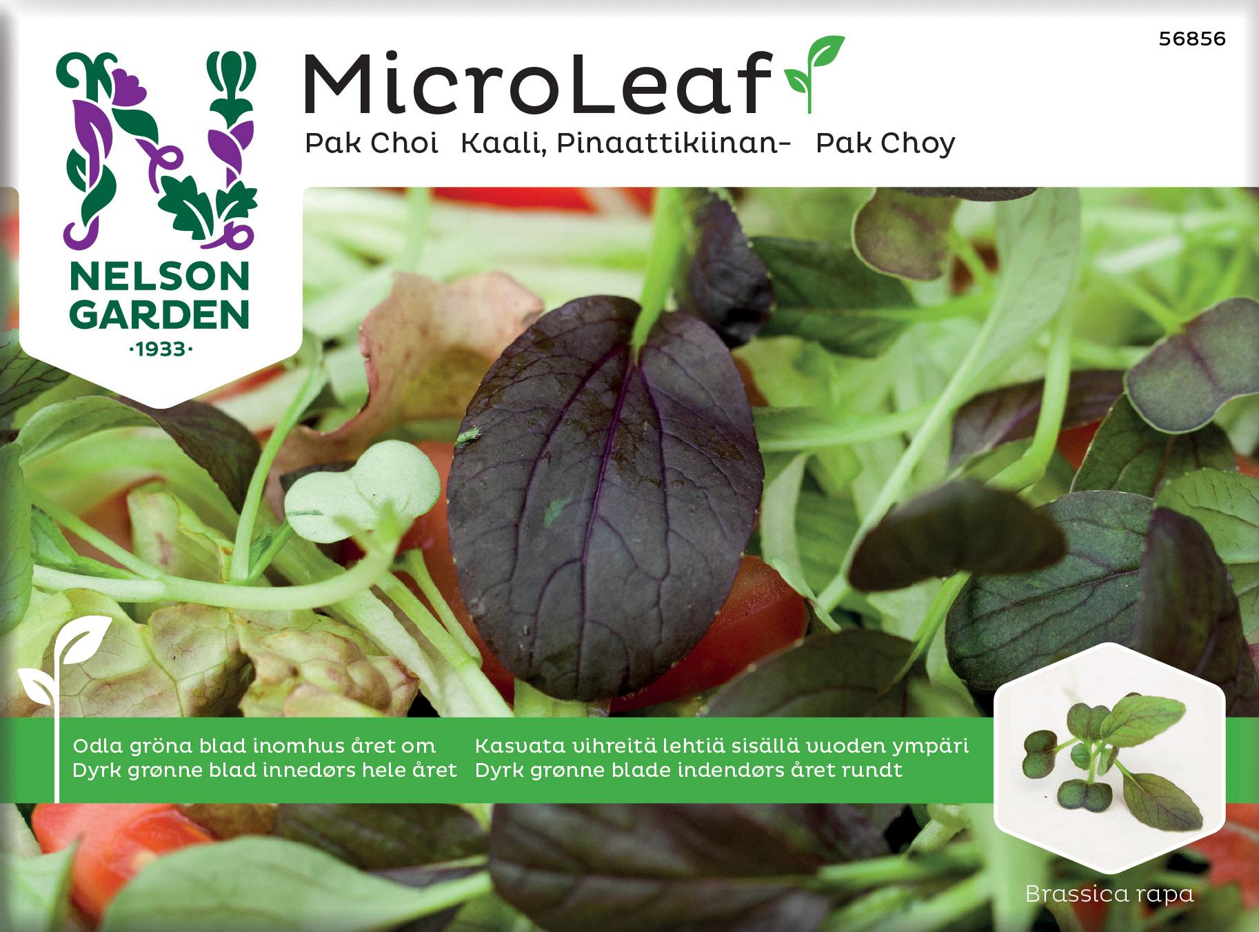 Produktbild på Micro Leaf Pak Choi 'Red Wizard'