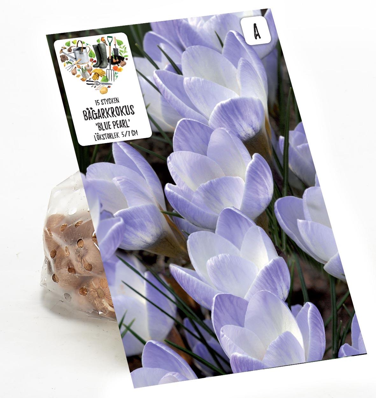 Produktbild på Bägarkrokus 'Blue Pearl'