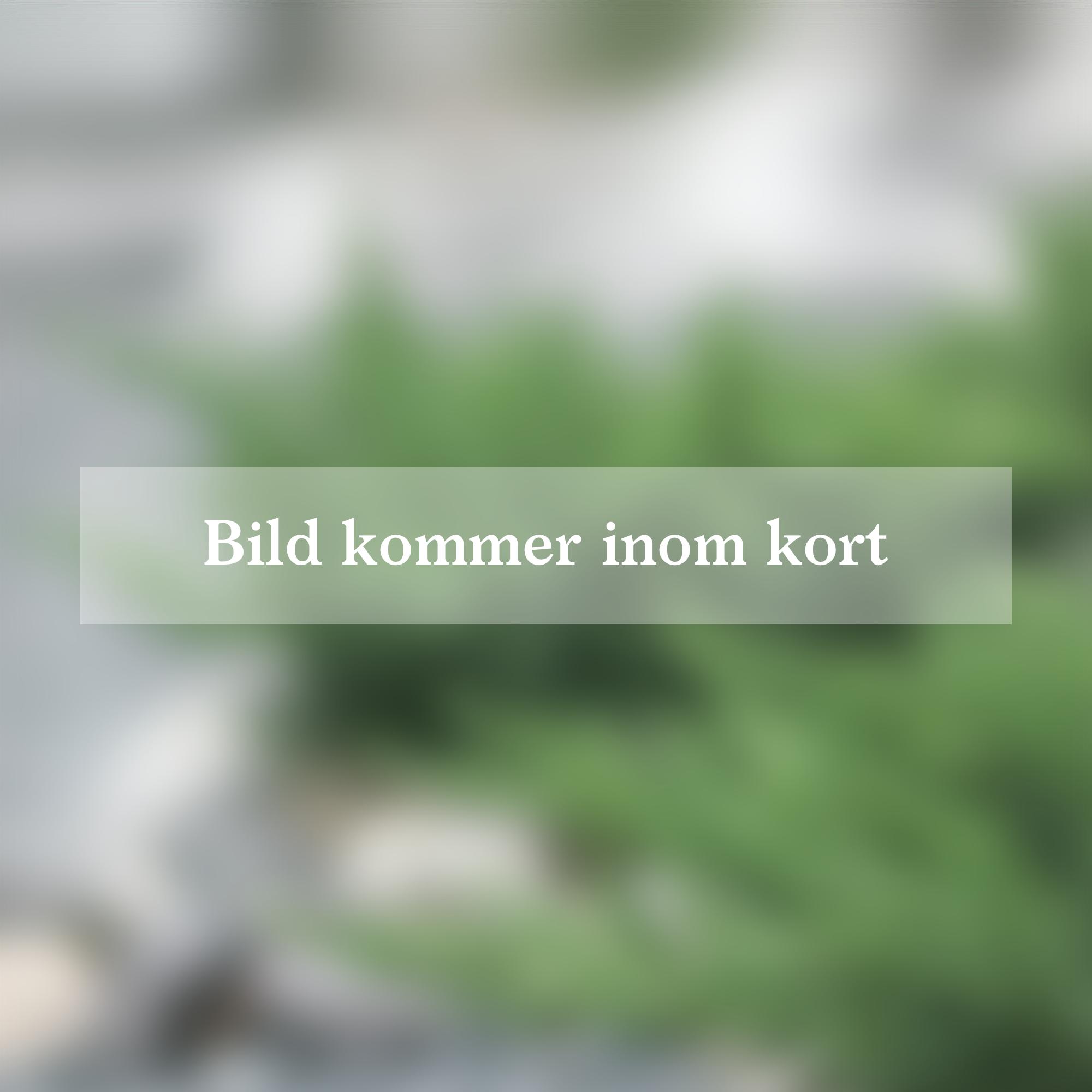 Produktbild på Surkörsbär SKUGGMORELL