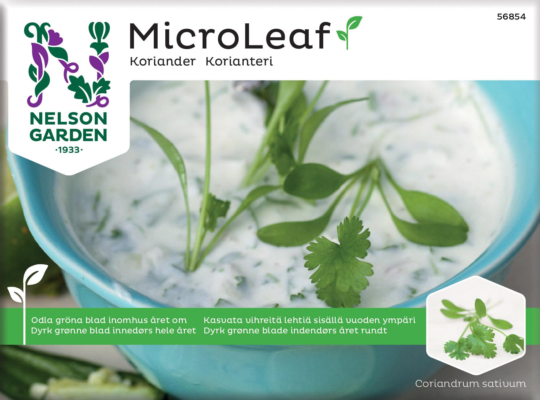 Produktbild på Micro Leaf Koriander 'Micro Splits'
