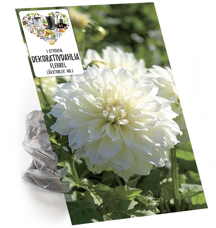 Produktbild på Dahlia 'Fleurel'