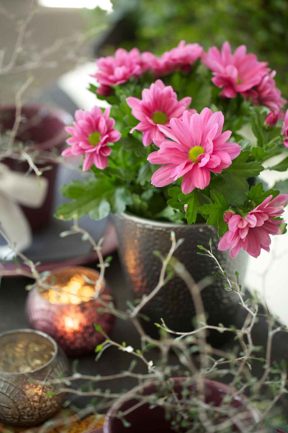 Produktbild på Krysantemum, 3-pl. rosa