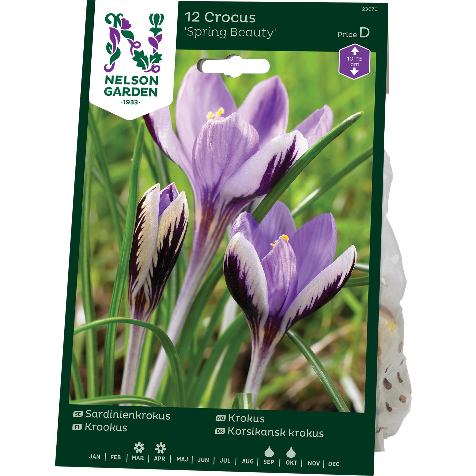 Produktbild på Sardinienkrokus 'Spring Beauty'