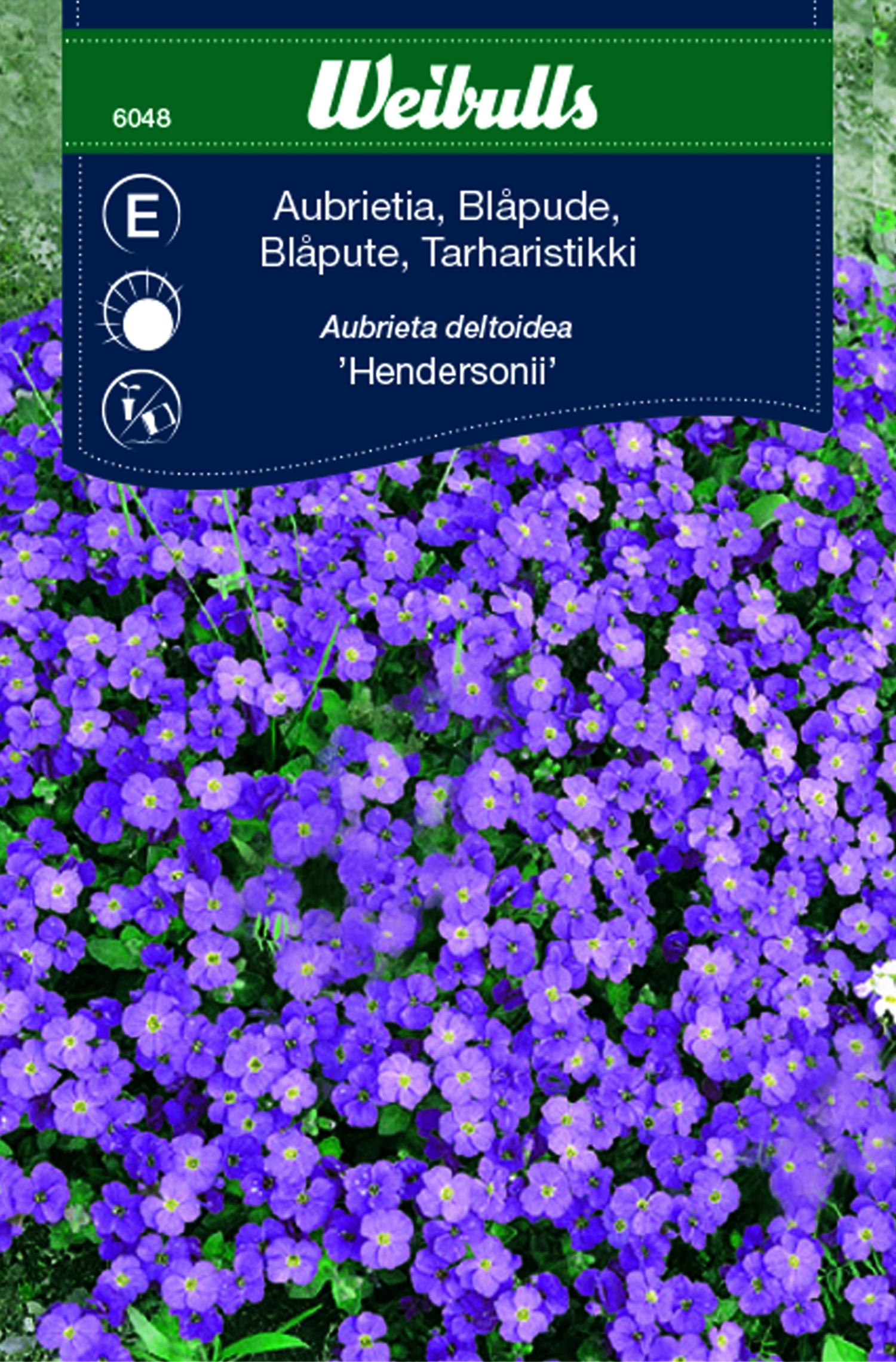 Produktbild på Aubrietia 'Hendersonii'