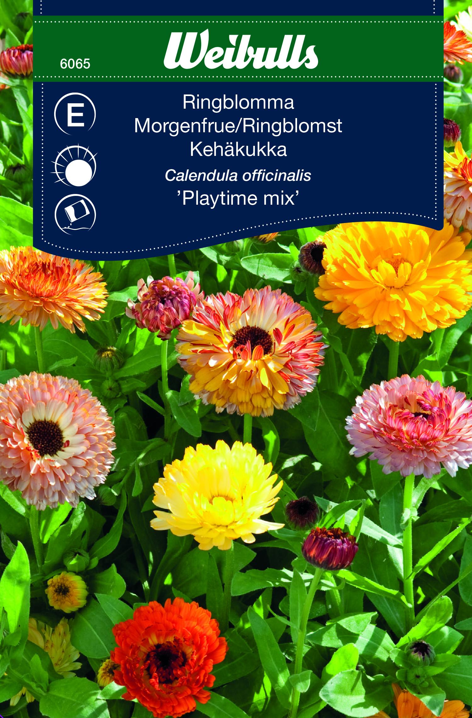 Produktbild på Ringblomma 'Playtime Mix'