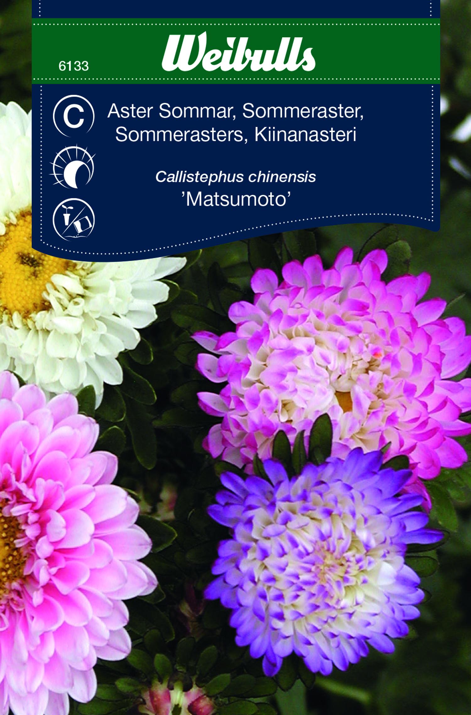 Produktbild på Aster 'Matsumoto'