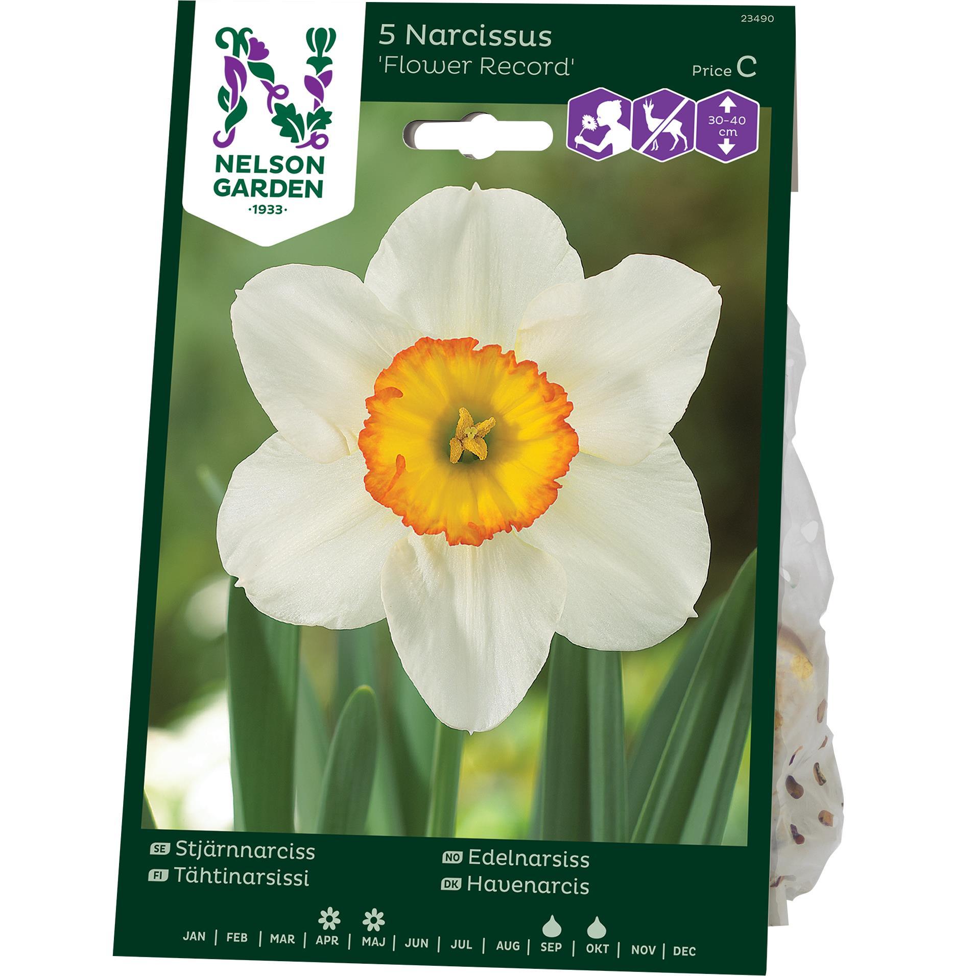 Produktbild på Stjärnnarciss 'Flower Record'
