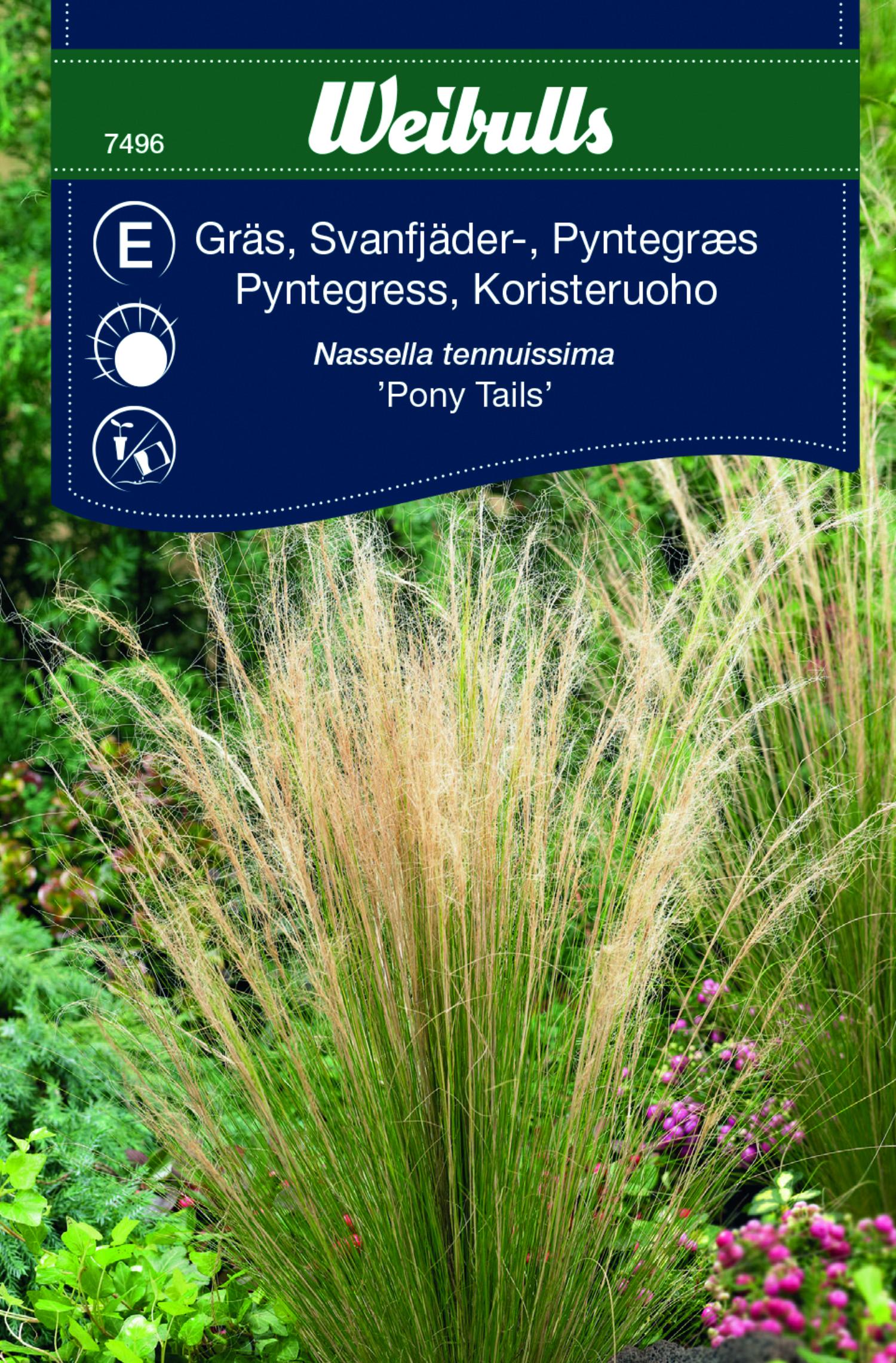 Produktbild på Svansfjädergräs 'Pony Tails'