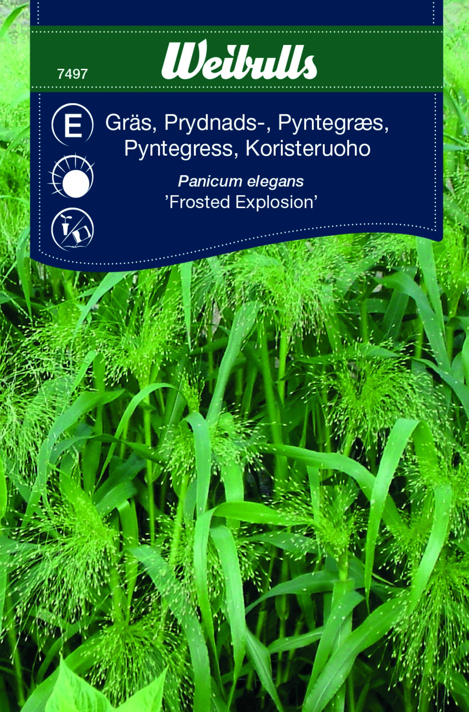 Produktbild på Prydnadsgräs 'Frosted Explosion'