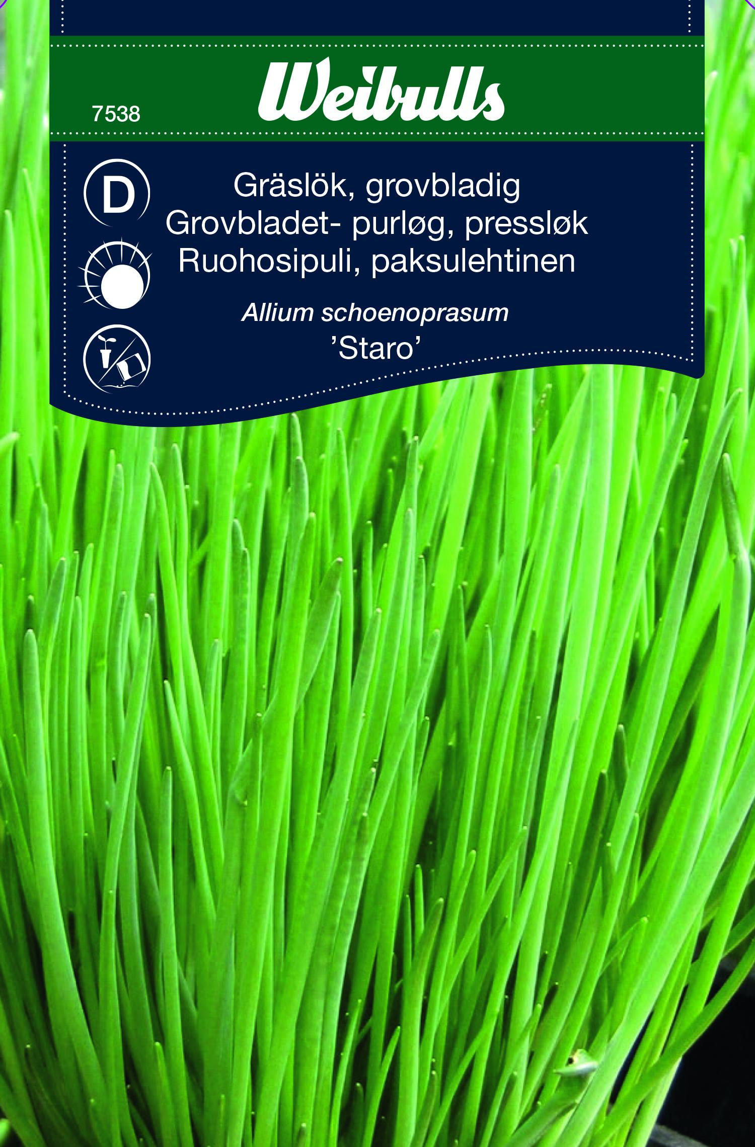 Produktbild på Gräslök extra grov 'Staro'