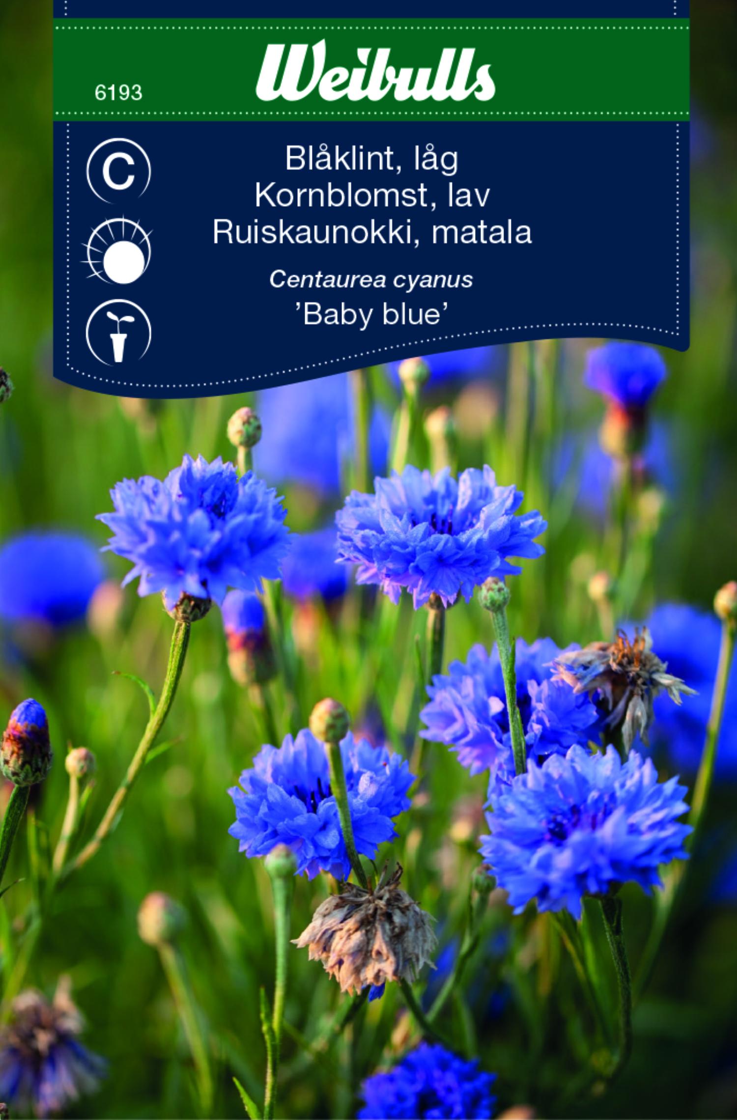 Produktbild på Blåklint 'Baby blue'
