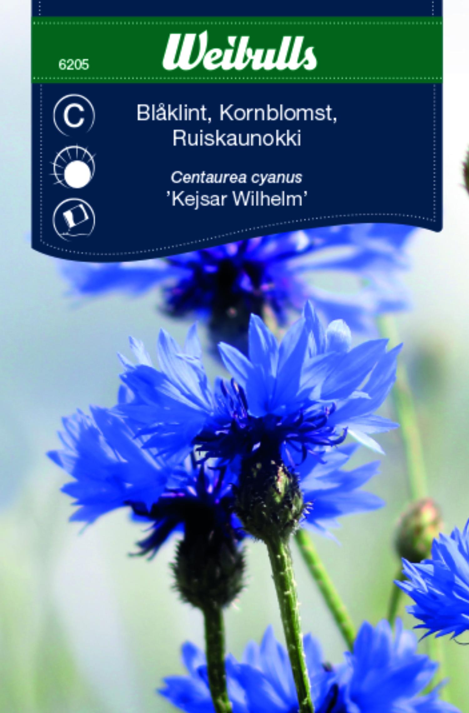 Produktbild på Blåklint 'Kejsar Wilhelm'