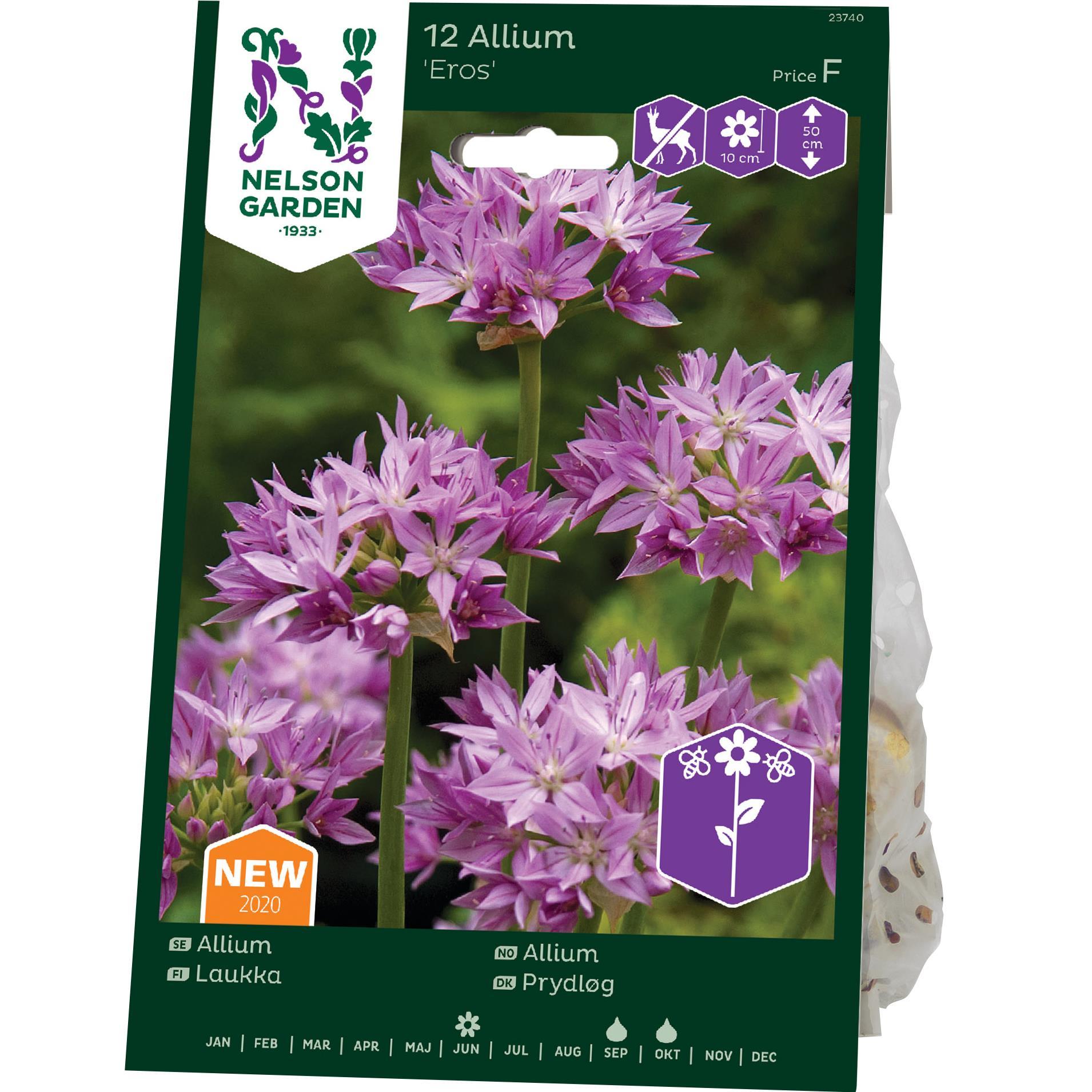 Produktbild på Allium 'Eros'