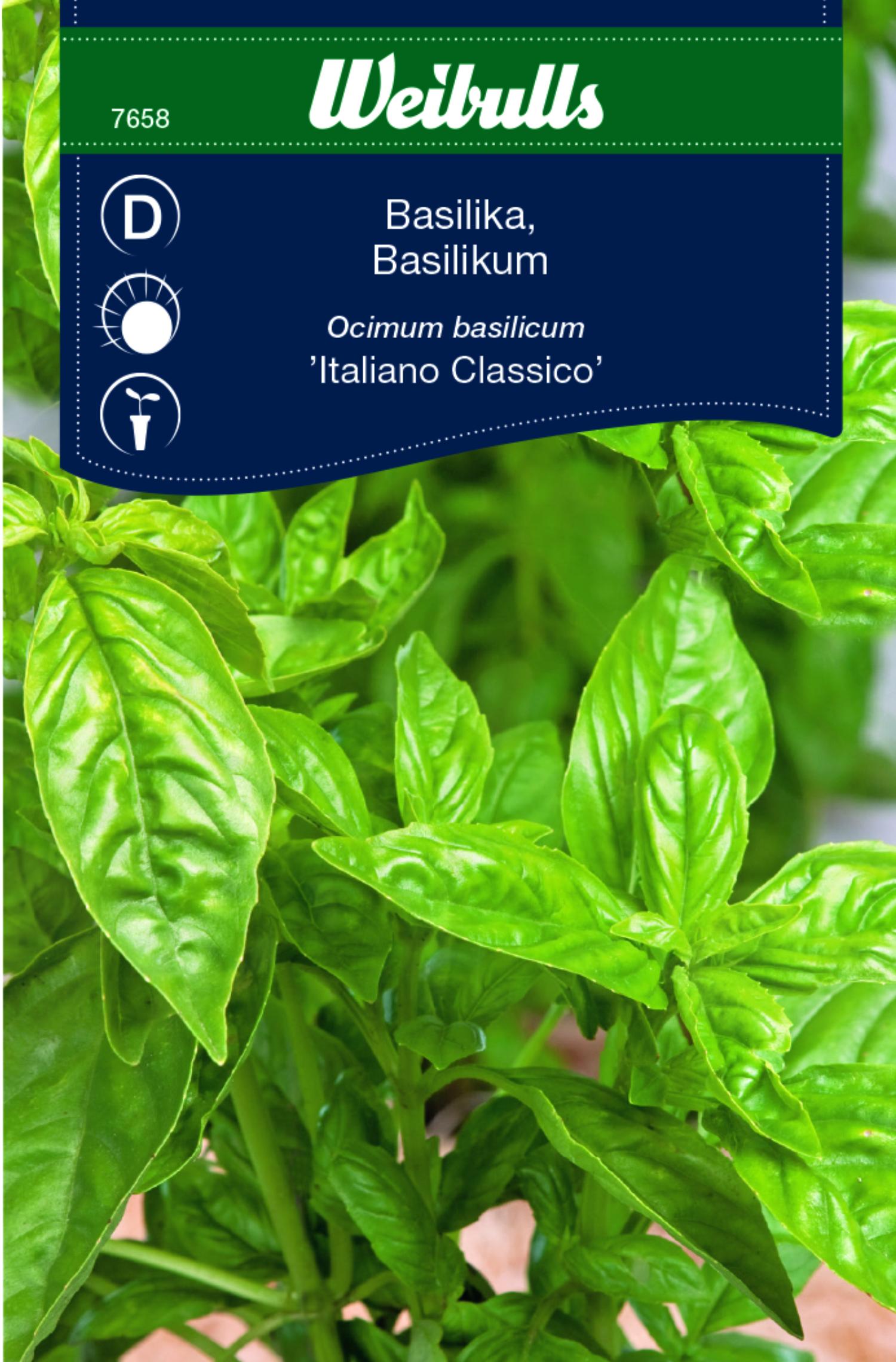 Produktbild på Basilika 'Italiano Classico'