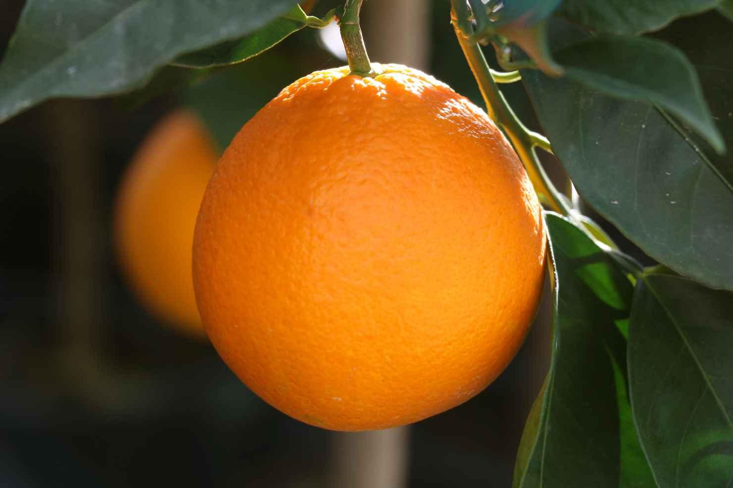 Produktbild på Apelsin
