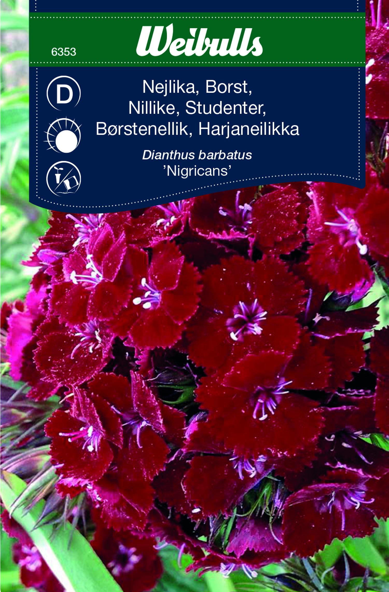 Produktbild på Borstnejlika 'Nigicans'