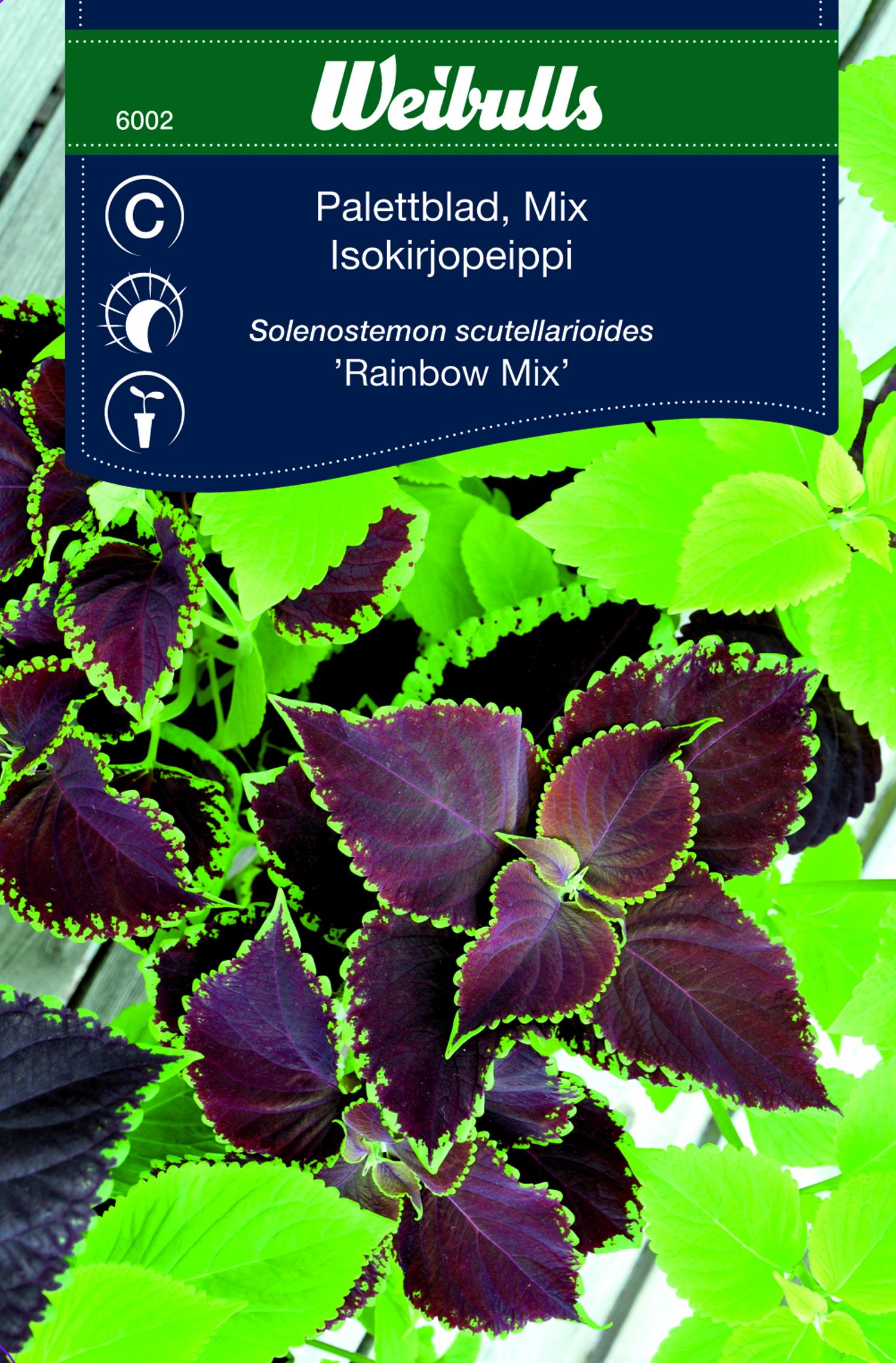 Produktbild på Palettblad 'Rainbow Mix'