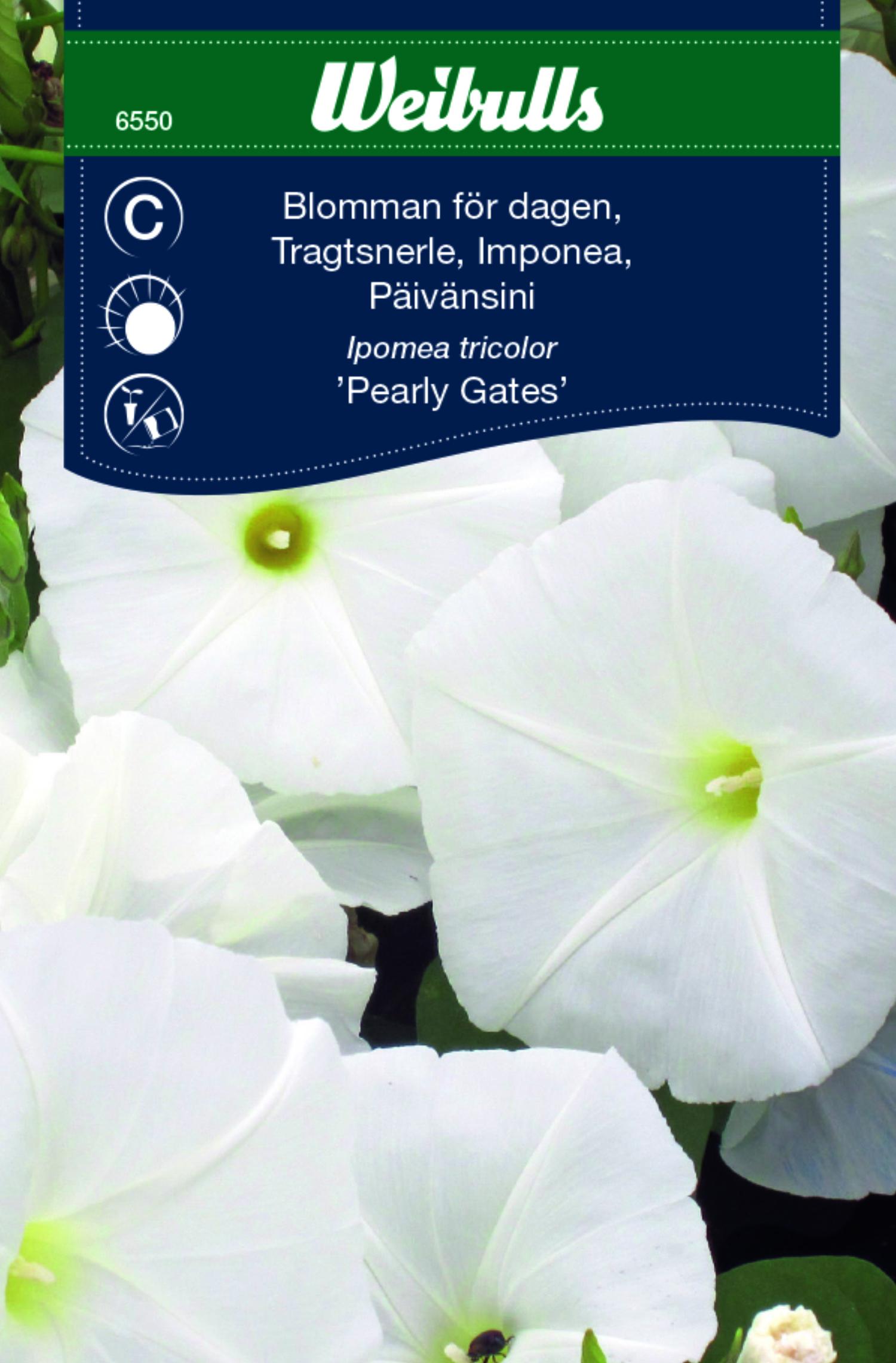 Produktbild på Blomman för dagen 'Pearly Gates'