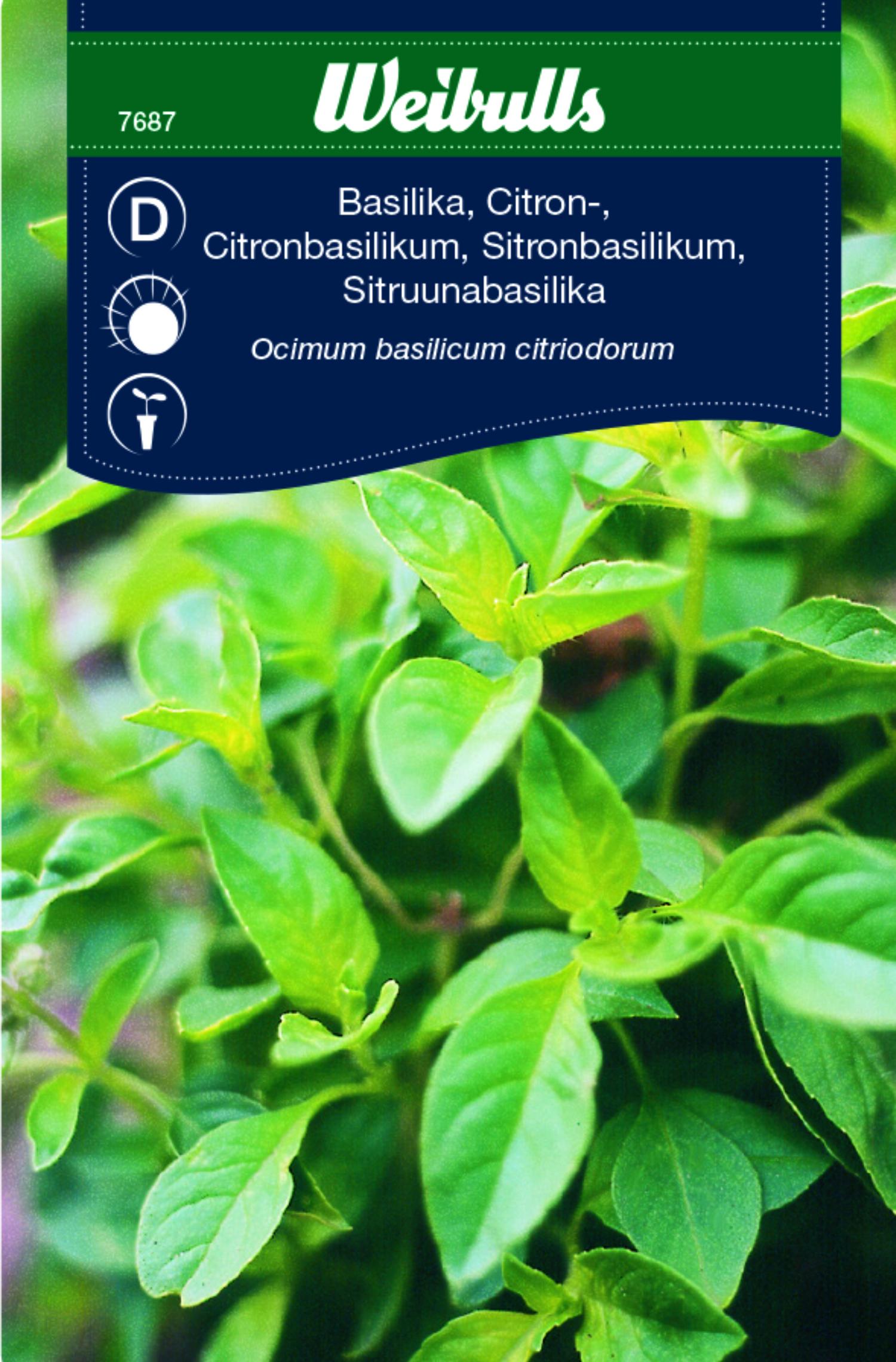 Produktbild på Citronbasilika
