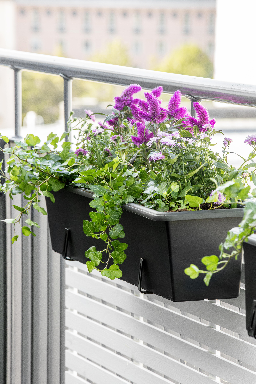 Produktbild 2 på Balkonglåda Botanica
