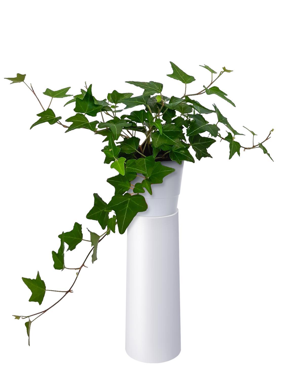 Produktbild på Murgröna