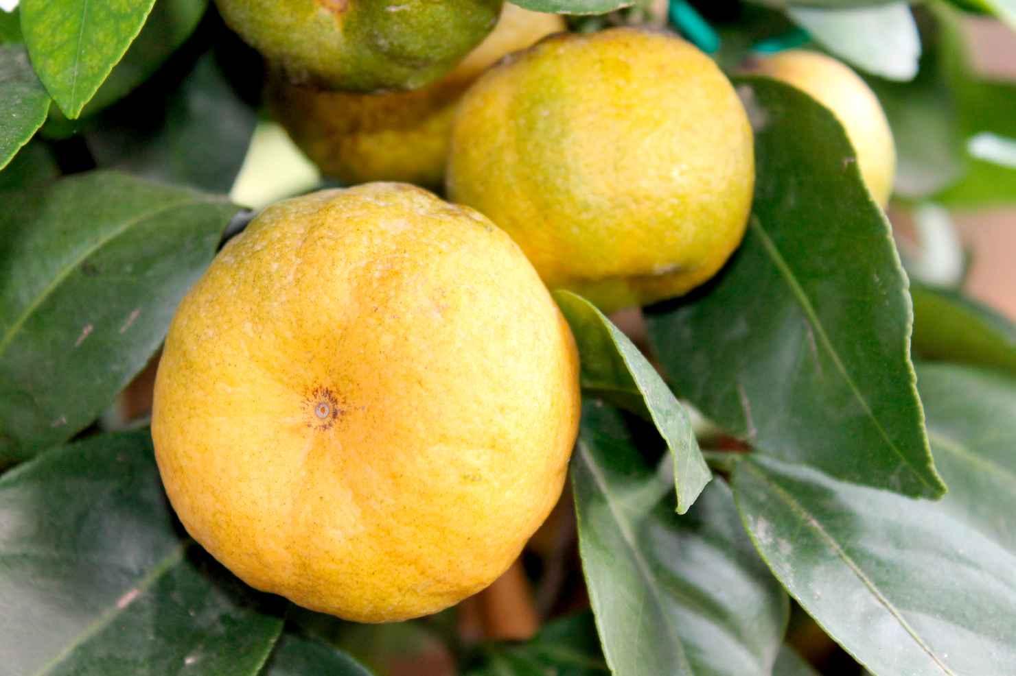 Produktbild 2 på Lime