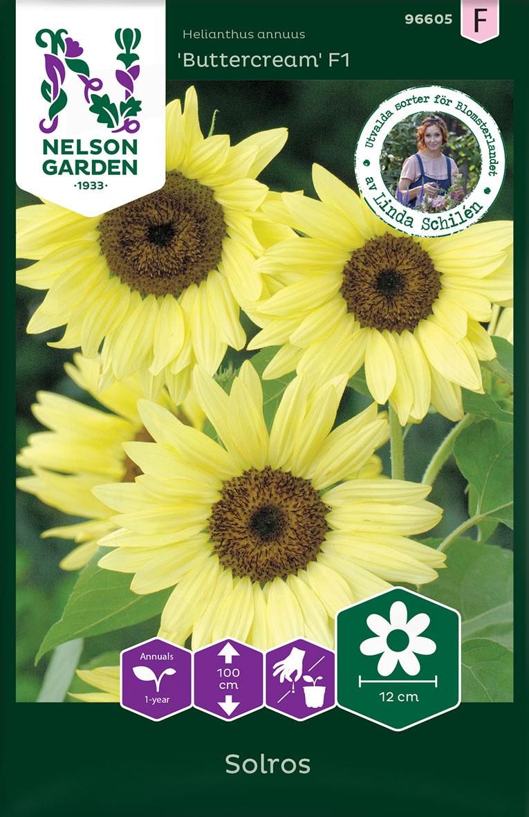 Produktbild på Solros 'Buttercream'