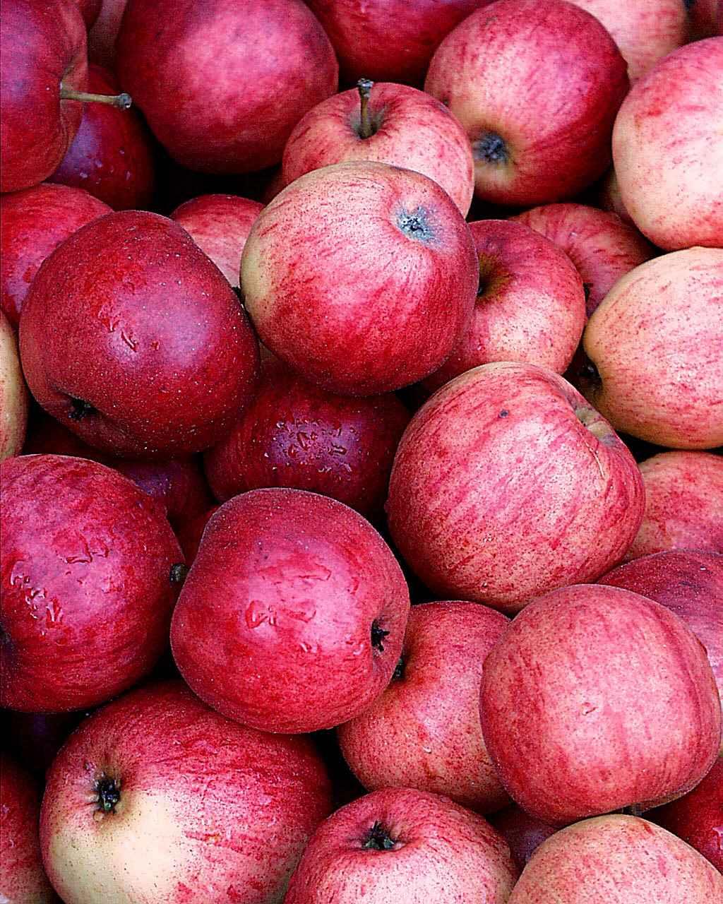 Produktbild på Äppleträd 'P. J. Bergius'