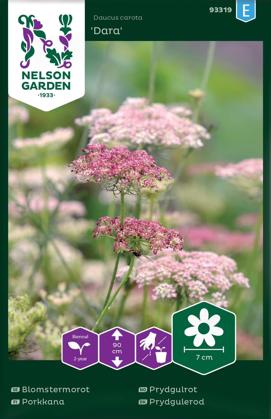 Produktbild på Blomstermorot 'Dara'