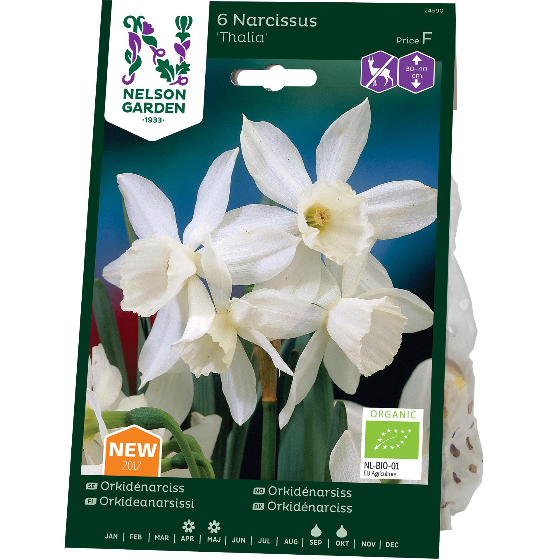 Produktbild på Orkidénarciss 'Thalia'