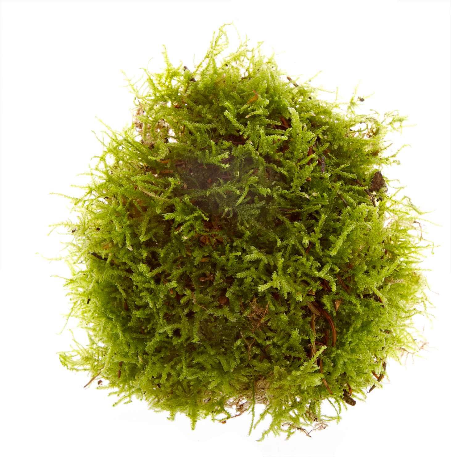 Produktbild på Grönmossa i påse