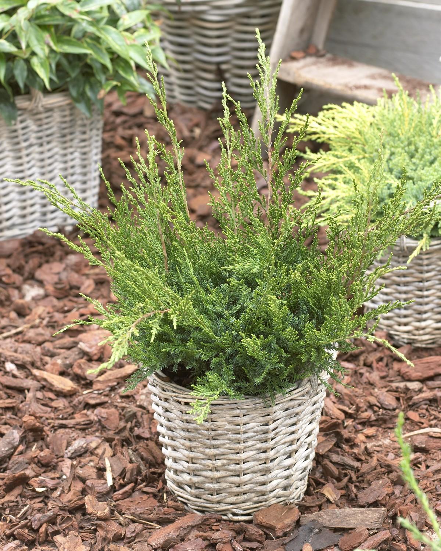 Produktbild 2 på Trädgårds-en