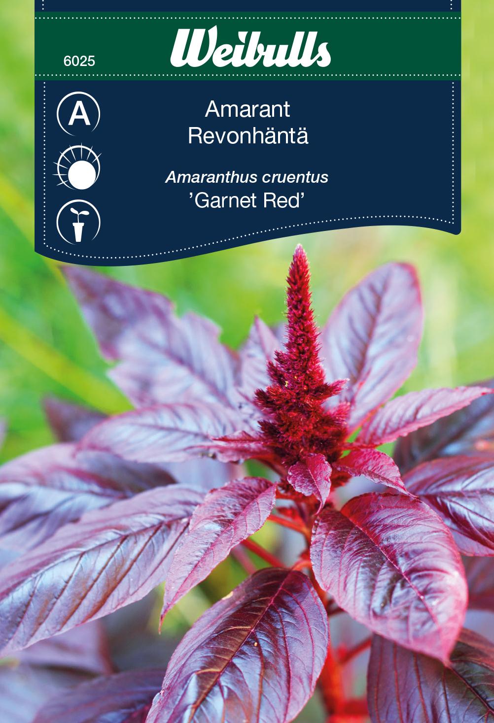 Produktbild på Amarant 'Garnet Red'