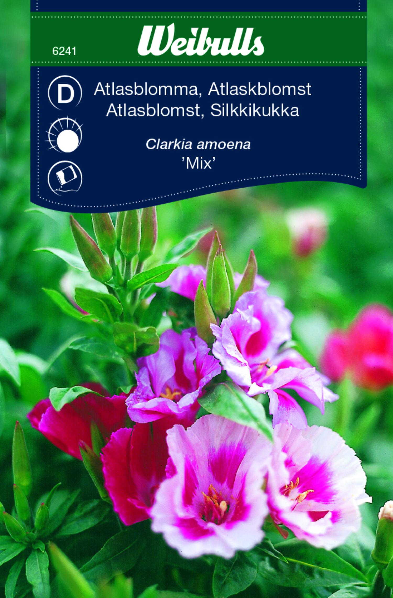 Produktbild på Atlasblomma mix
