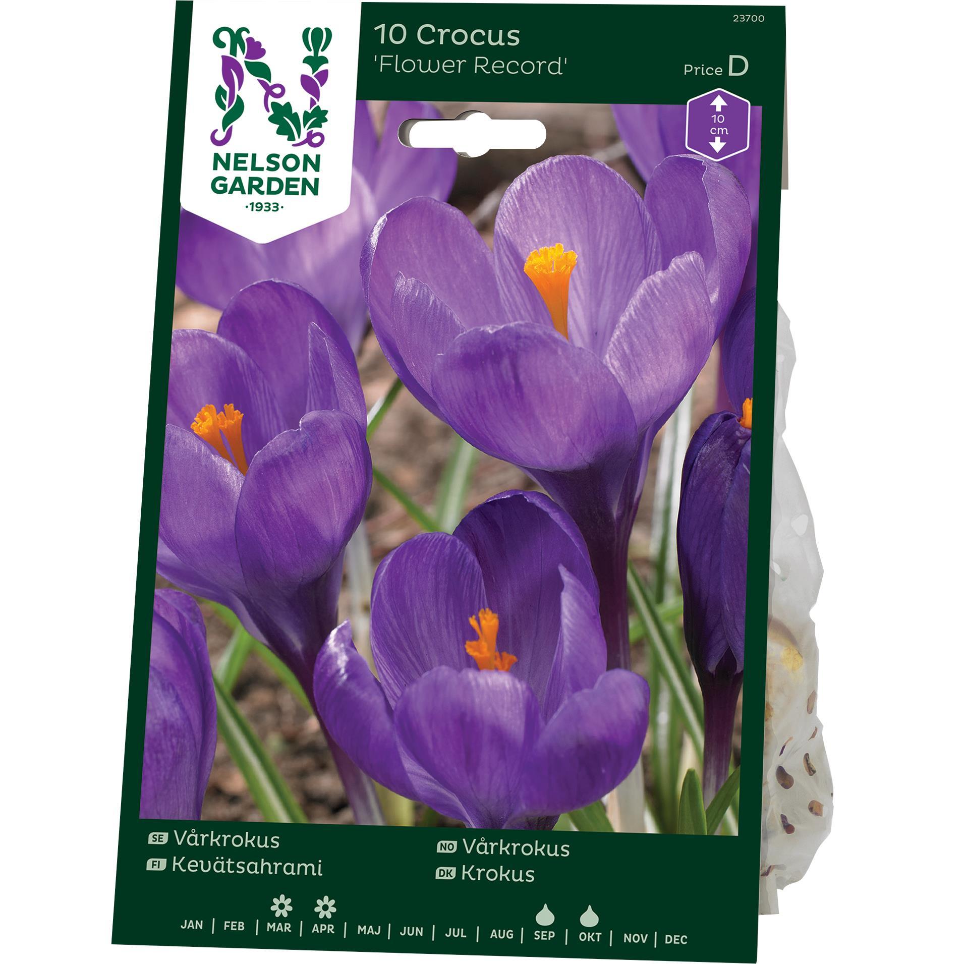 Produktbild på Vårkrokus 'Flower Record'
