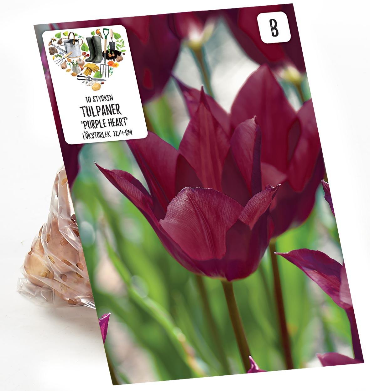 Produktbild på Tulpan 'Purple Heart'