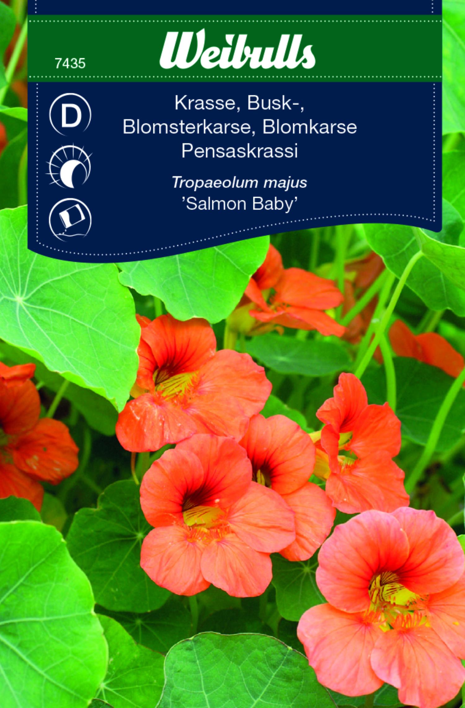 Produktbild på Buskkrasse 'Salmon Baby'